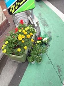 花植えの苗配達